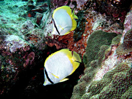 Key Largo scuba instruction and underwater photography