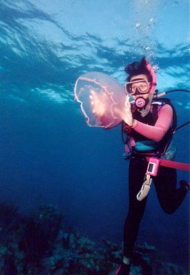 Diver with Moon Jellyfish off Key Largo
