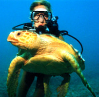 Diver and Turtle in Key Largo